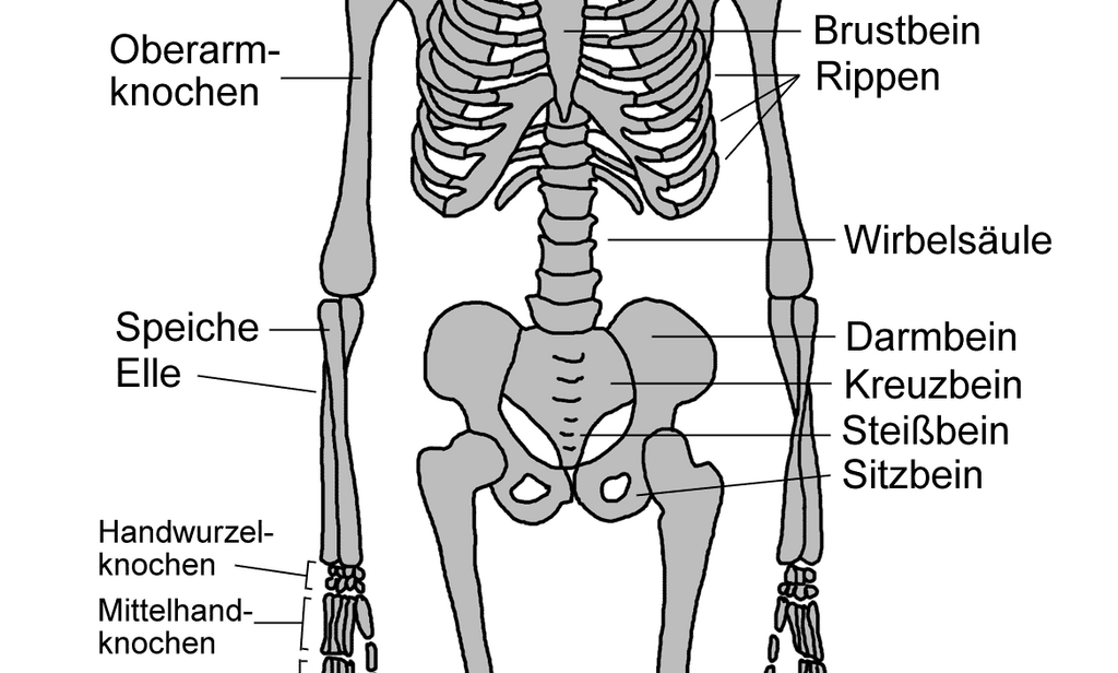 Kennst du das skelett des menschen? | Menschen in AxiPIX
