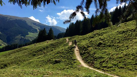 Saalbach Panorama - Zline